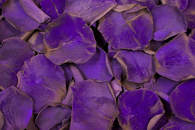 Preserved rose petals Purple