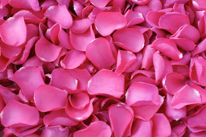 Product box freeze dried rose petals  hot pink