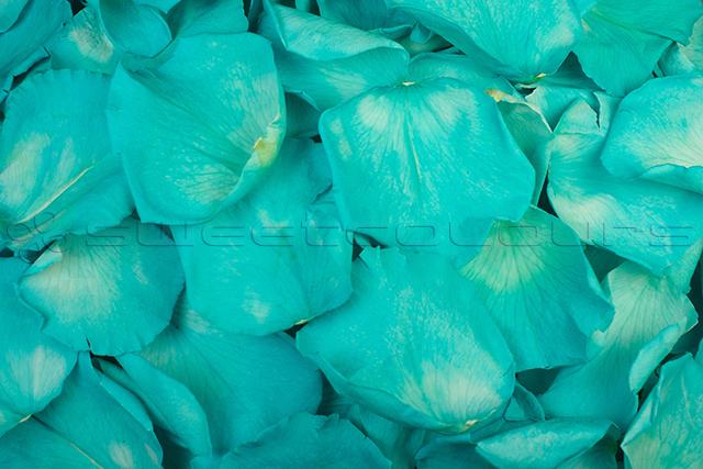 Geconserveerde rozenblaadjes Turquoise