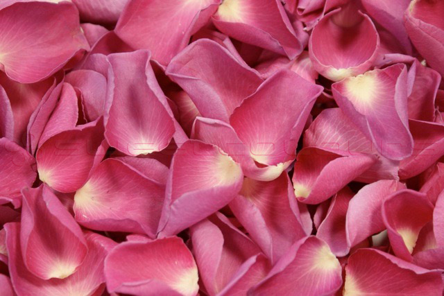 Freeze Dried Rose Petals Classic Pink
