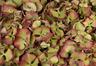 Pétalos de hortensia de color Verde vintage