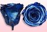 Roses conservées Bleu métallique