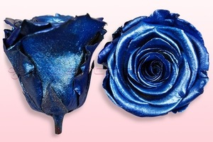 Preserved roses Metallic blue