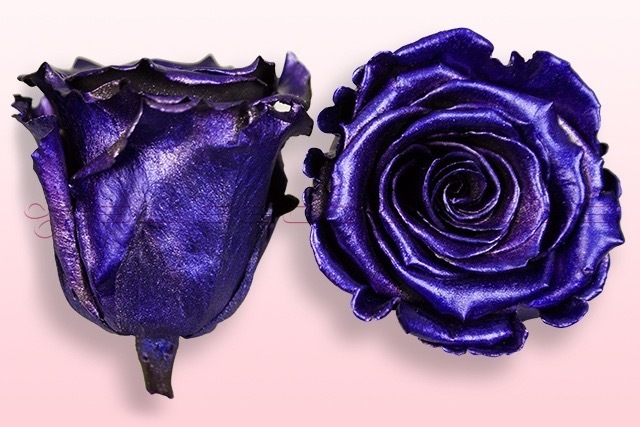 Preserved roses Metallic purple