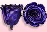 Roses conservées Violet métallique