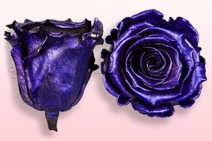 Product box rose amor  preserved roses  metallic purple