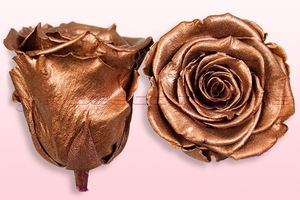 Product box rose amor  preserved roses  metallic copper