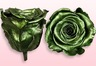Geconserveerde rozen Metallic groen