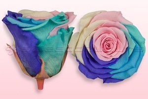 Product box rose amor  preserved roses  rainbow pastel