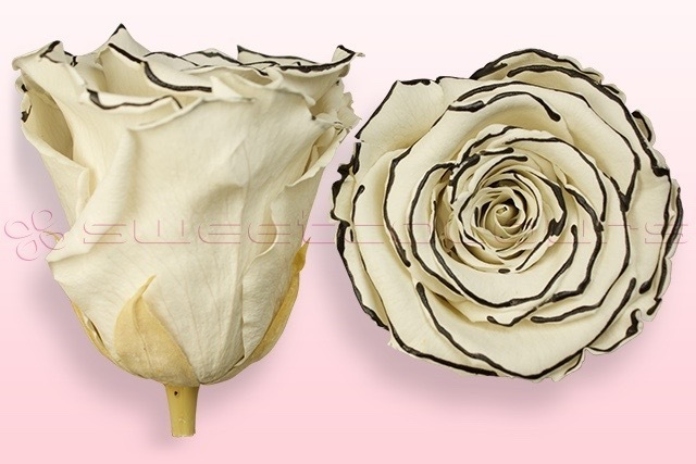 Geconserveerde rozen Zebra