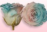 Geconserveerde rozen Roze & blauw pastel