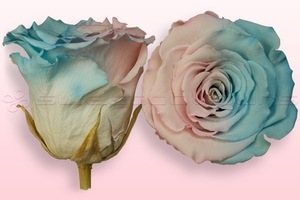 Product box rose amor  preserved roses  pink   blue pastel
