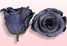 Preserved roses Grey