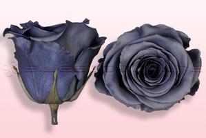 Konservierte Rosen Grau