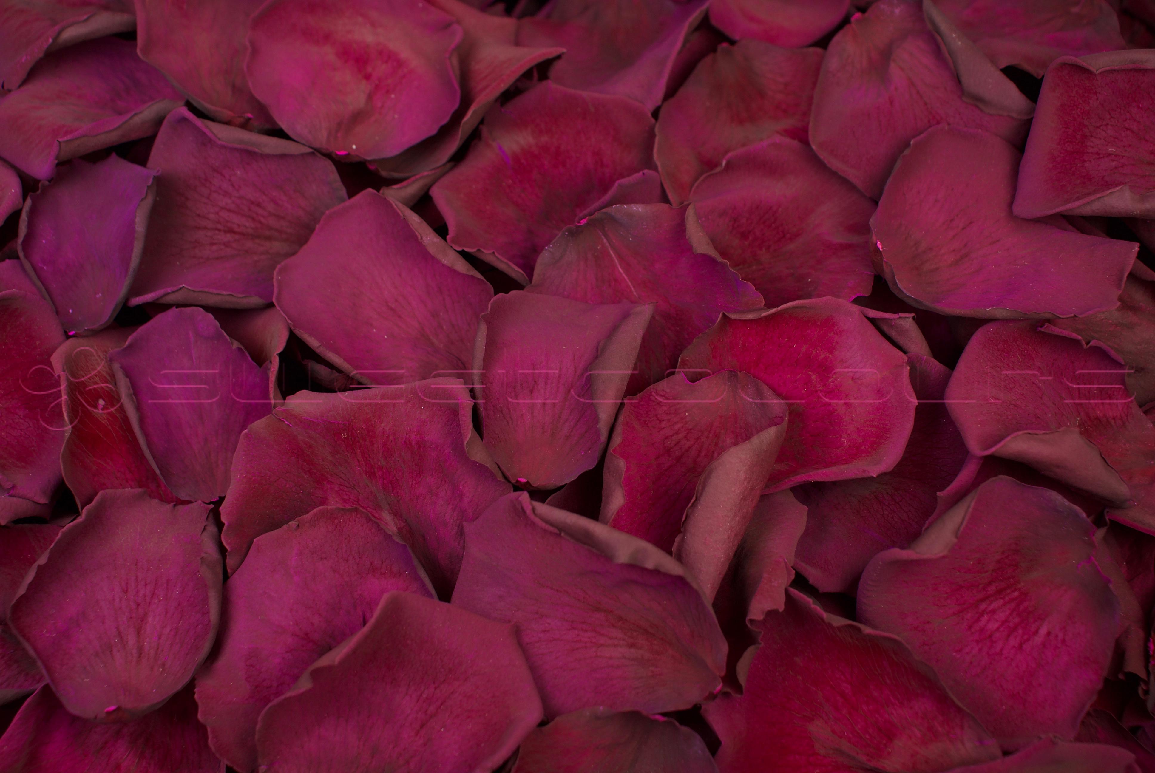 Konservierte Rosenblätter Wein