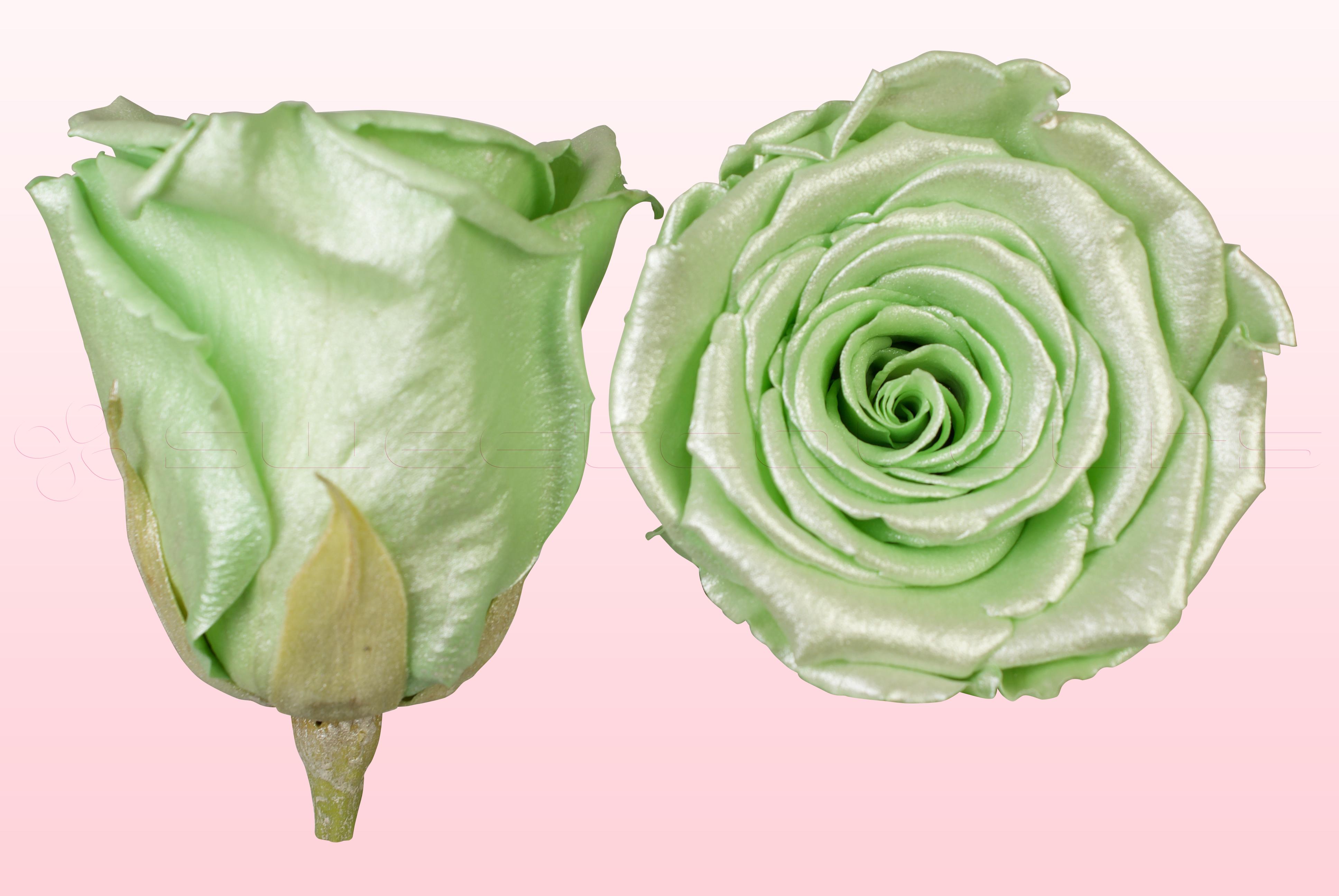Konservierte Rosen Satin mintgrün