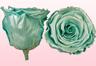Konservierte Rosen Satin tükis