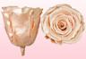Geconserveerde rozen Satin perzik