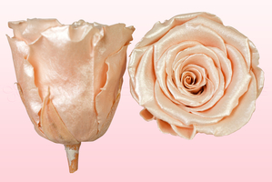Product box rose amor  preserved roses  satin peach
