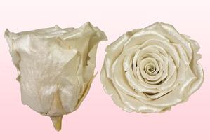 Product box rose amor  preserved roses  satin white