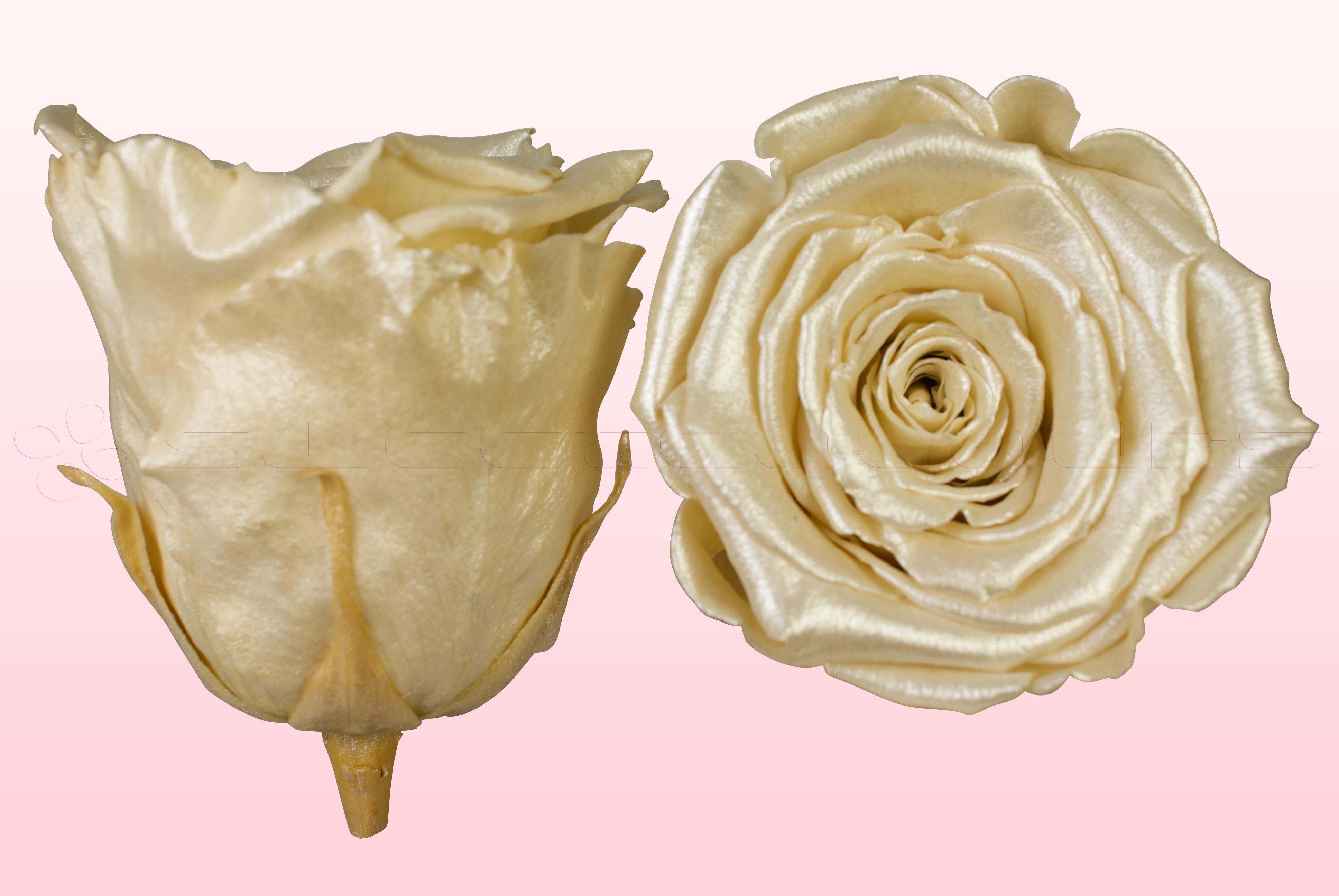 Geconserveerde rozen Satin champagne
