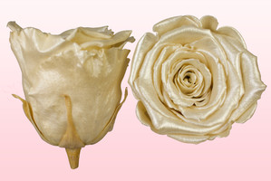 Product box rose amor  preserved roses  satin champagne