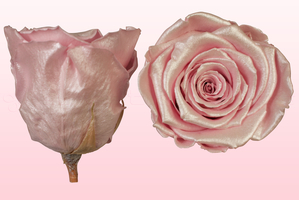 Product box rose amor  preserved roses  satin pink