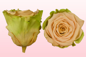 Product box rose amor  preserved roses  sand