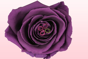 Product box preserved roses purple