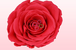 Product box preserved roses hot pink