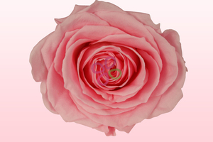 Product box preserved roses pale pink