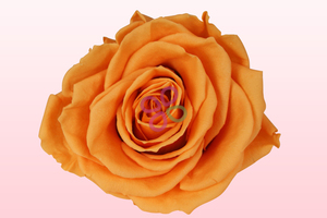 Product box preserved roses orange