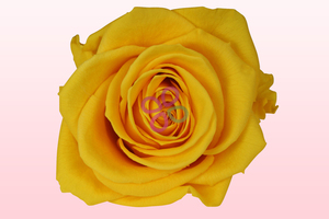 Product box preserved roses yellow