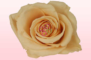 Product box preserved roses peach