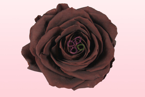 Brown Preserved Roses