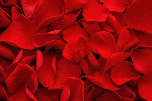 Product box preserved rose petals  red 1