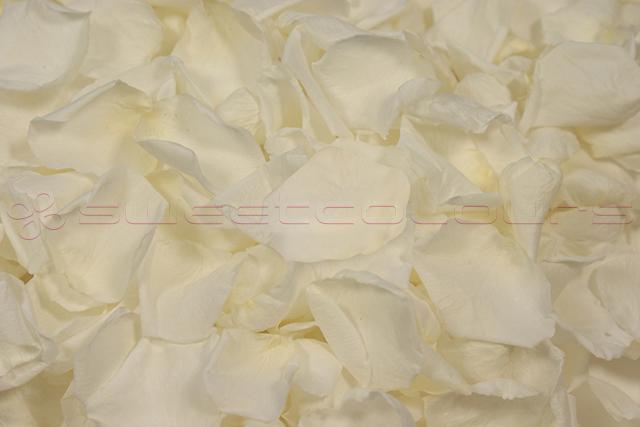 Konservierte Rosenblätter in der Farbe Weiss
