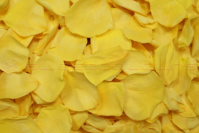 Preserved Rose Petals Yellow