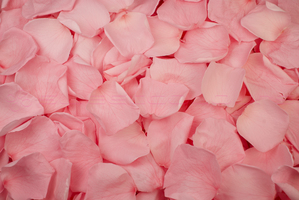 Product box preserved rose petals  light pink