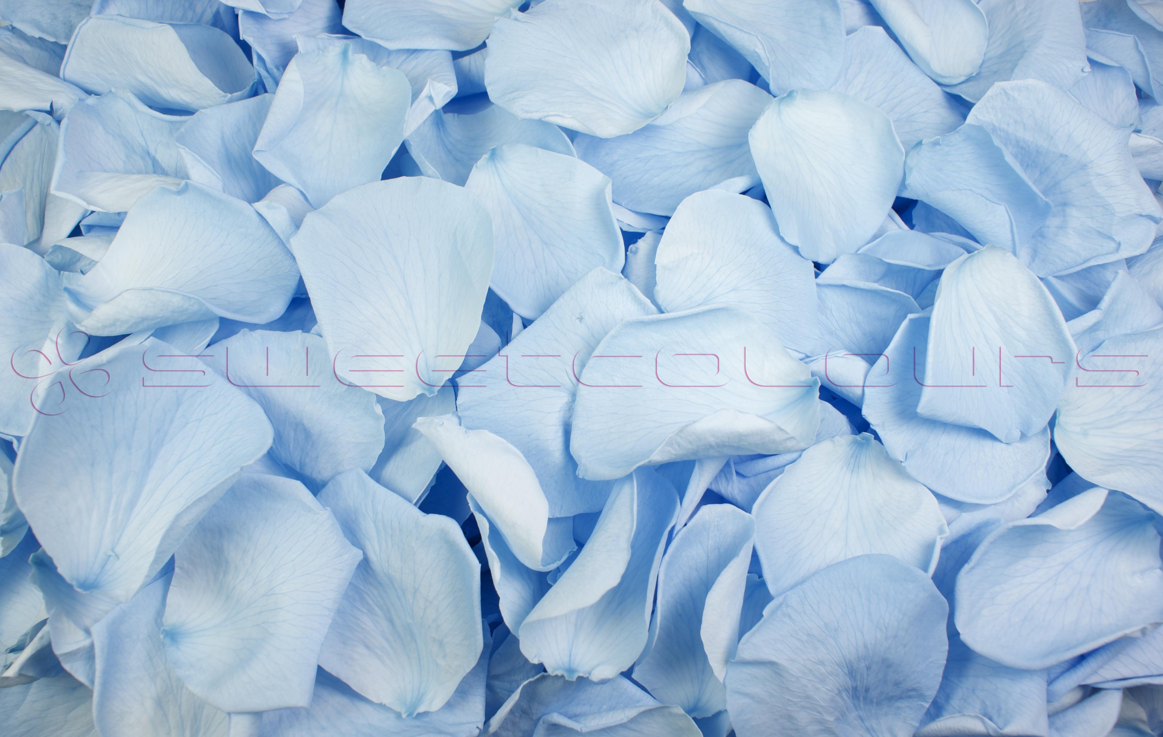 Preserved Rose Petals Light Blue