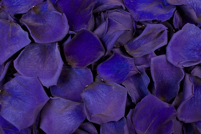 Geconserveerde Rozenblaadjes Donkerblauw