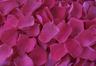 Pétalos de rosa preservados de color fucsia