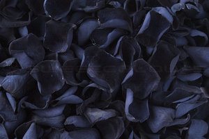 Preserved Rose Petals Black