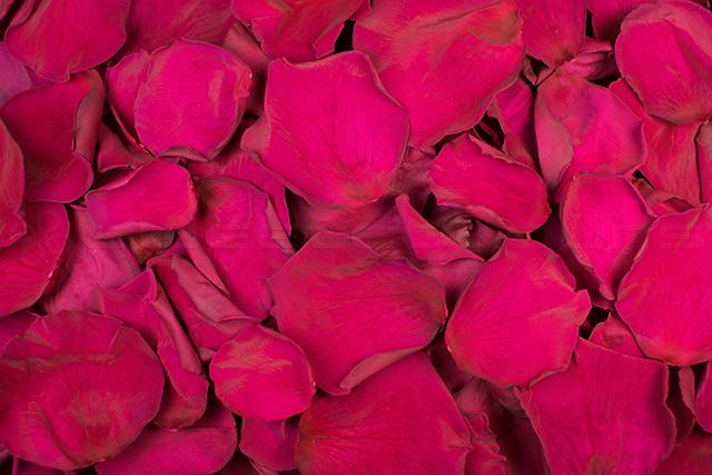 Pétales de roses conservés de couleur Violet