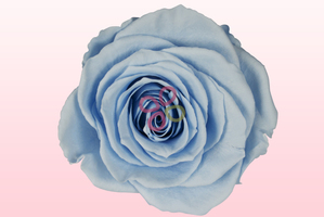Product box preserved roses blue