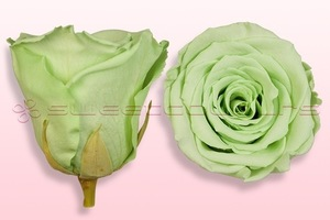 Product box rose amor  preserved roses  mint green