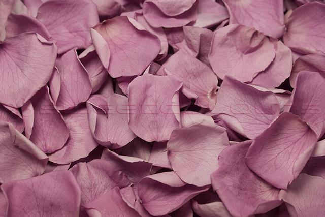 Preserved Rose Petals Lavender