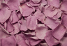 Pétalos de rosa preservados de color Lavanda