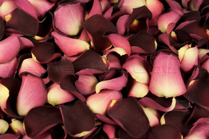 Freeze Dried Rose Petals Ruby Red