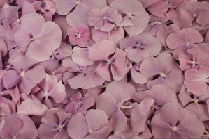 Hortensiablaadjes Lavendel